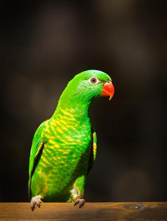 green bird  Banco de Imagens
