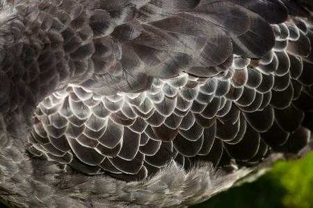 detail feathers