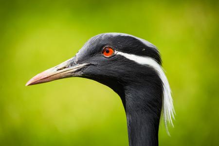 crane bird  Banco de Imagens