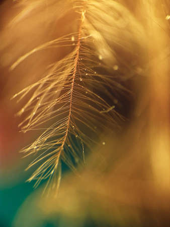 Orange down feather on a green background