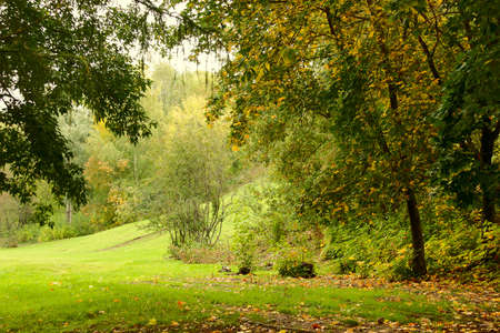 autunno parco con un arco di alberi