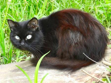 Gato preto macio na grama verde
