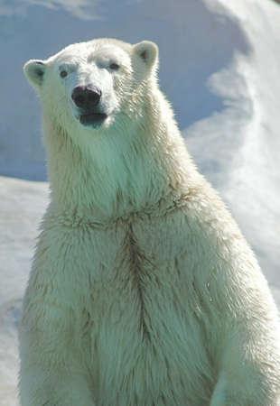 estandes de ursos polares e olhares