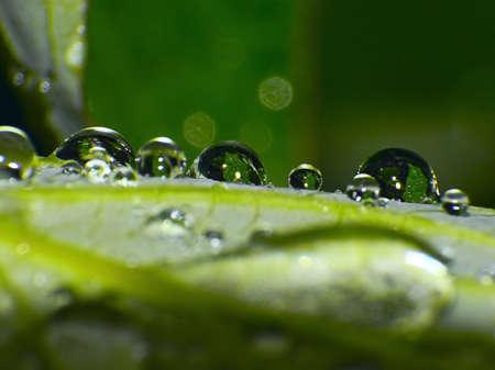 microcosm: dew drops on green leaf