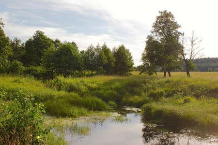creek in the field