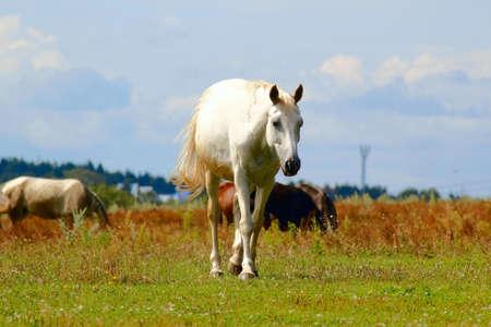 égua branca em um campo com um rebanho de