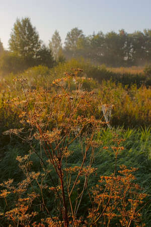 meadow grass with dew photo