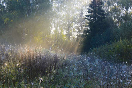 clearing in the woods in the fog and morning light photo