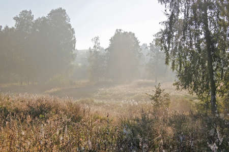 rustic meadow with a pond in the early morning photo