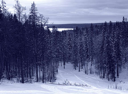 landscape with a hill on a winter fir forest                         Stock Photo