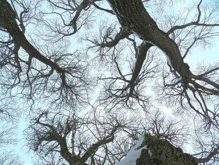 fractais pseudo de ramos de salgueiro Imagens