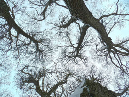 pseudo fractals of willow branches