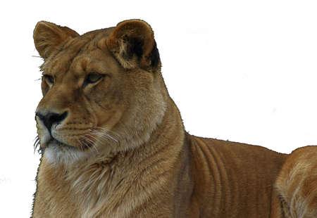 leoa solit
