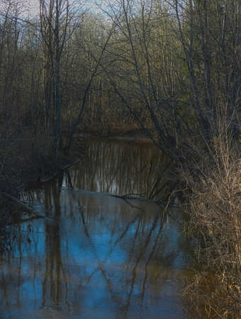 Forest river in the spring