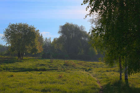 meadow with birches in May Stock Photo