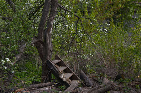 slums: Spring deserted garden with old apple tree Stock Photo