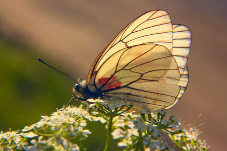 Borboleta branca em uma flor Imagens