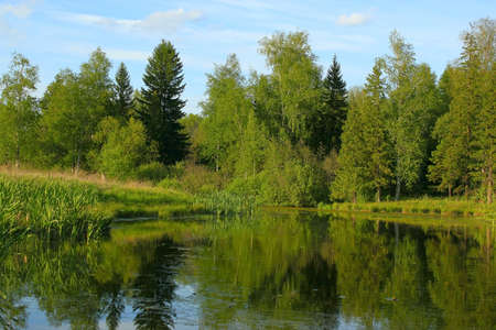 lake with birch and spruce trees