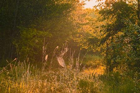 lowland: lowland meadow morning Stock Photo