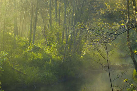 forest stream in the fog