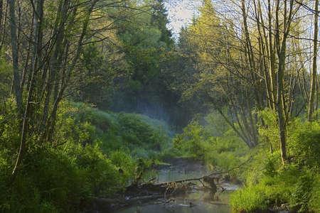 córrego da floresta no nevoeiro
