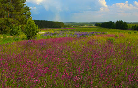 field of road flowers and butterflies