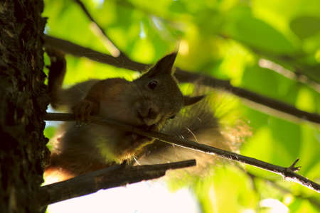 tree dweller: squirrel snagged on a tree trunk and looks