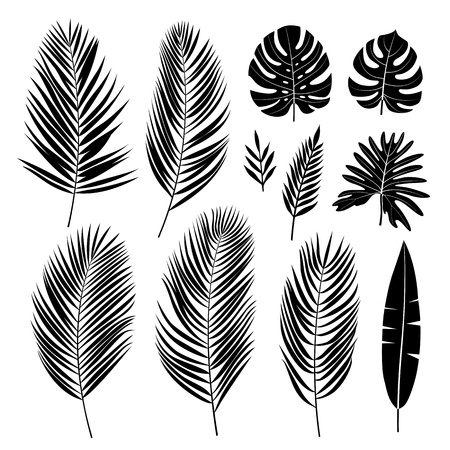 Set of palm leaves. Black silhouette of tropical plants. Vector collection. Illustration