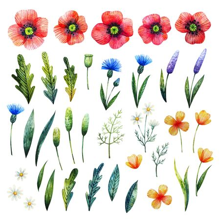Watercolor floral elements. Poppies, cornflowers, chamomile and leaves. Hand drawn wildflowers.