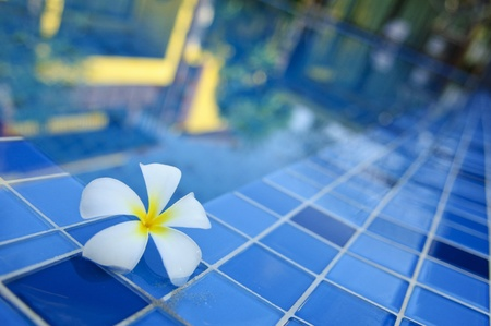 pool side: flower by pool with the reflection Stock Photo