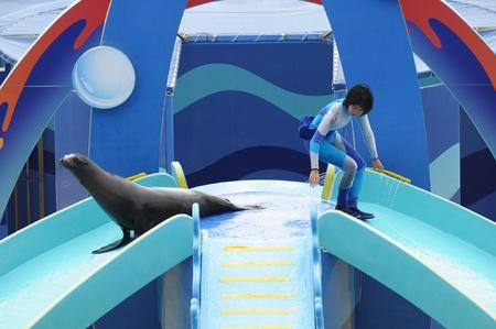 grampus: Ocean Park, Hongkong - November 20,2010 - aquarium show, sea lion show Editorial