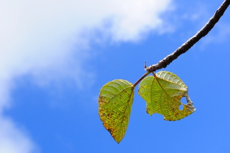 blue sky and green leaves photo