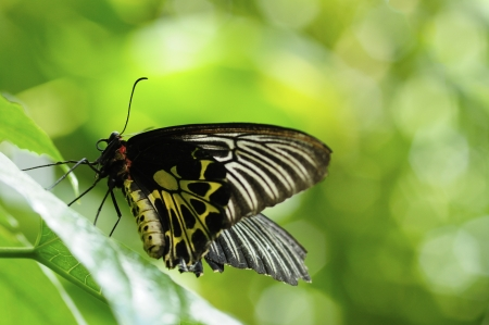butterfly on the leaf of tree Stock Photo - 9104951