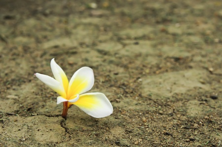 on the ground: flower in dried cracked soil Stock Photo