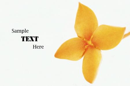 Orange Ixora Flower isolated on white