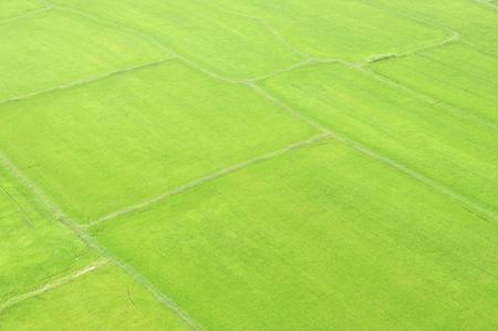 borderline: field of grass and borderline