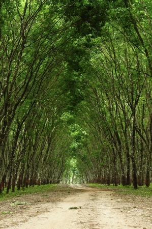 A Path in the green forest photo