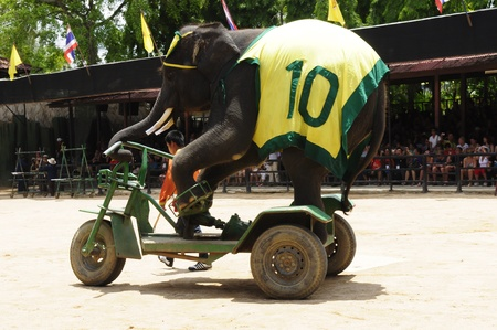Nong Nooch Garden,  Thailand - May 5,2011 -  Elephant show, an elephant rides bicycle