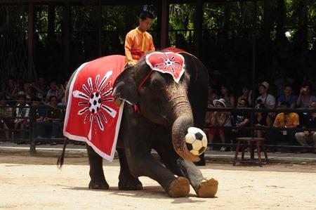 Nong Nooch Garden,  Thailand - May 5,2011 -  Elephant show, an elephant plays football