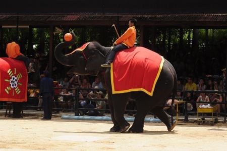 Nong Nooch Garden,  Thailand - May 5,2011 -  Elephant show, an elephant plays basketball