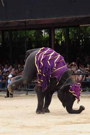 Nong Nooch Garden,  Thailand - May 5,2011 -  Elephant show, an elephant stands by two front legs
