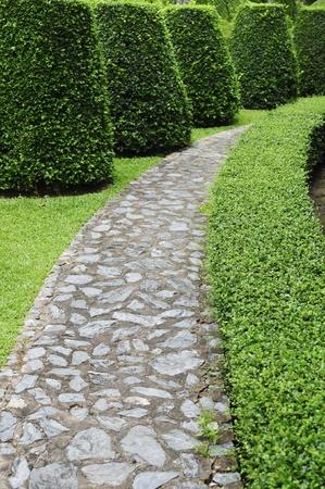 Stone pathway pass through a green garden