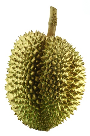 Durain, the king of fruit of South East Asia isolated on white photo