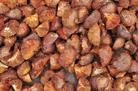 Dried Betal Nut or Areca Nut photo