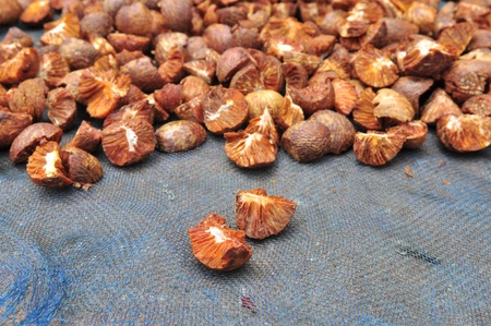 Dried Betel Nut or Areca Nut. Betel nut or Areca nut is seed of the betel palm