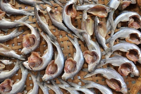 grey mullet: Grey mullet fish