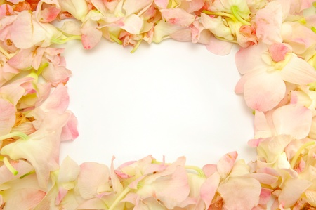 Orchid flower frame photo