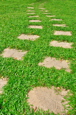 Pathway in a green grass photo