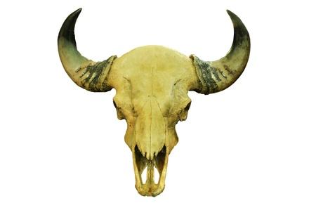 ranching: Buffalo skull