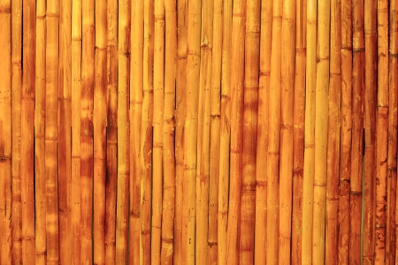 Bamboo background photo